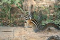 Squirrels 5