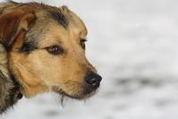 dog on snowy landscape 1