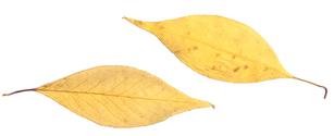 Autumn leaves 5