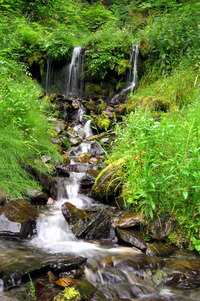 Alaska Trails 4