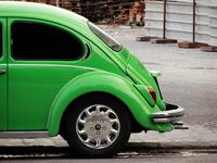 WV beetle 1
