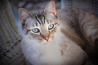 My Cat Bert 3