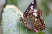 Various Butterfly Shots 5