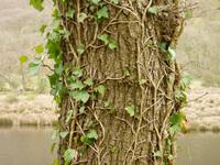 Tree-trunk 4