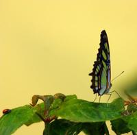Butterfly macro 4