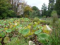 Pond in Montpellier