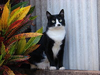 My cat Mimi 2