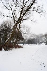 snow jan 10