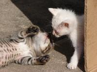 Orphaned cats / Gatos abandonados
