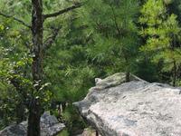 Stone Mountain Woods Shot