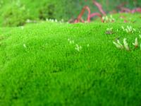 Mossy Carpet 2