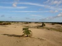 sandy place