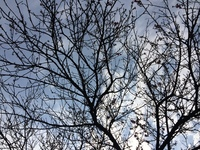 The Spring Peach Tree 1
