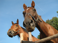 horses on the sky