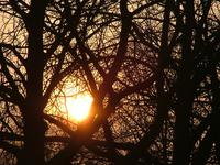 Sun trough tree