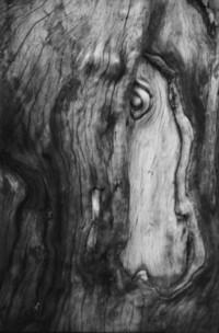 tree horse