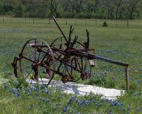 Horse-drawn Harvester