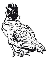 clip art chicken 4