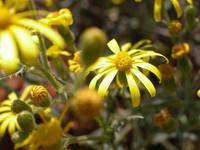 Veld Flowers