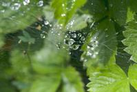 Spiderweb after Rain