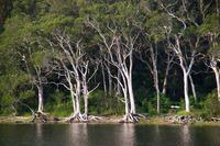 Cockrone Lagoon trees