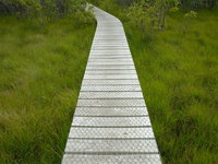 nature path 2