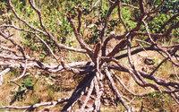 nature free photos 4