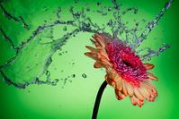 Watering the Flowers 1