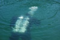 diver, divers, scuba, diving