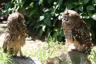 Owl chatting