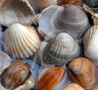 More shells 4