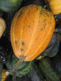 Gourds gourds gourds! 4