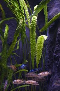 aquarium with bright leafs