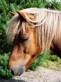 Horses. 5