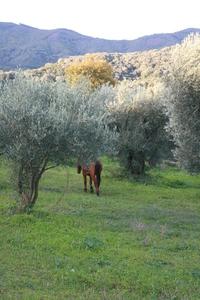 leaving horse
