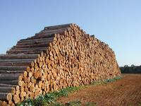 Big wood pile