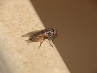 Uma pequena mosca na praia