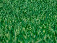 Texture - Grass
