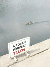 anarchic ducks