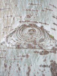 alamo texture 2