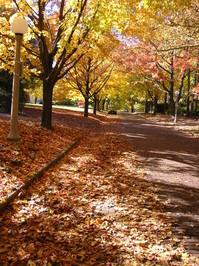 Fall road 2