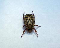 Beetle 2 2