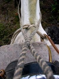 Costa Rican Horses 2