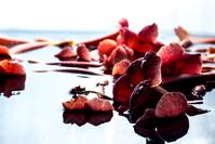 flowers in water