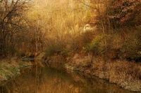golden trees golden stream