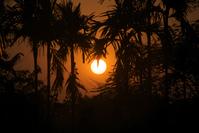 Sunset between trees
