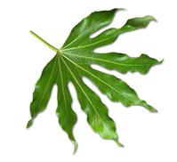 Tree Leaves 1