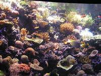Shedd Aquarium, Chicago 2
