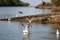 seaguls 3