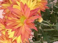 orange flower zoomed